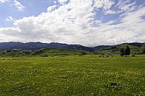 蓝天白云下绿绿的草地上盛开的小黄花