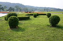 绿色的草地美景