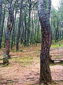 茶马古道原始森林