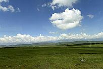 蓝天白云下的一望无际的草地