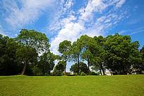 蓝天绿树草地