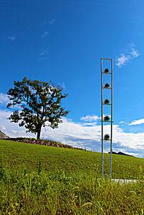 路灯和樟树