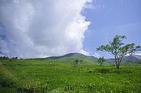 山顶的绿色植被