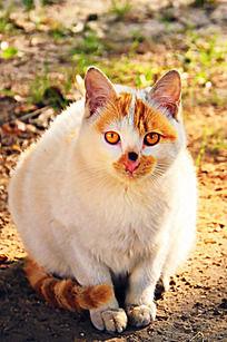 大眼睛猫咪