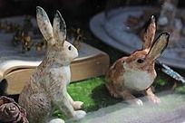 对视的兔子