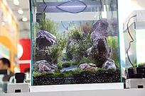 小缸水草造景图片