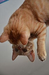 镜子里的猫