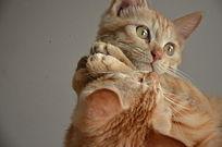 炯炯有神的猫