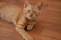 眯缝着眼的猫