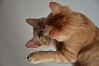 趴在镜子上的猫