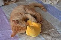 玩玩具的猫