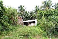 杂草丛中小建筑