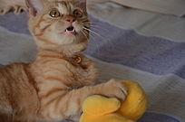 张着嘴的猫
