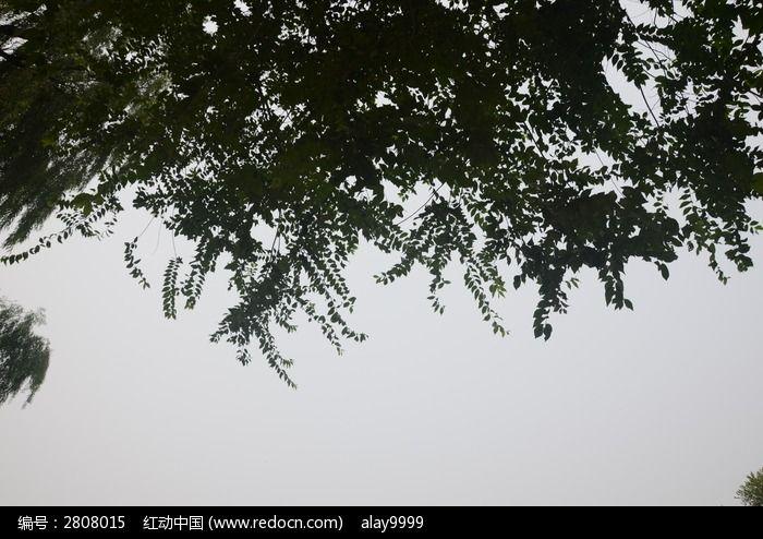 天空和树枝