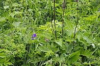 长白山绿色植被