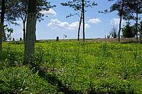 碧绿的草丛