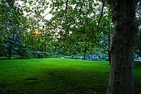 大树荫下的绿色草坪