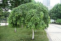 蘑菇形状的绿植