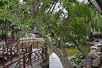十笏园园林景观之荷塘中的小桥