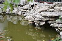十笏园园林景观之荷塘中的游鱼