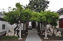 十笏园园林景观之架子上的藤条