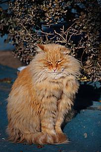 一只懒洋洋的猫