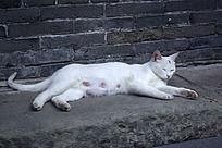 一只流浪猫