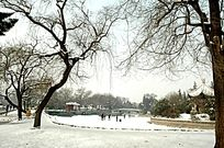 美丽的公园雪景