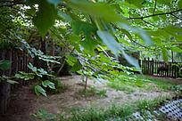 树叶造型背景是动物的园子