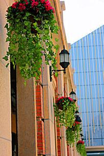 汉街建筑门楼上悬挂的绿植