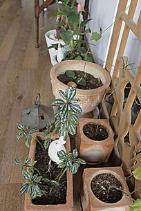 角落里陶罐中的绿植和白兔