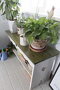 小台子上的大叶绿植