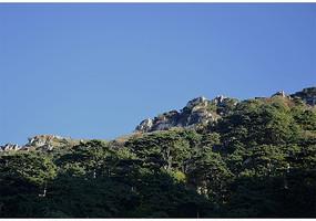 茂密的树木长与泰山上