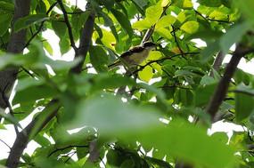 树枝上的鸟