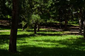 照到林间草地的阳光