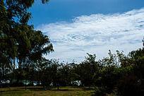 蓝天白云下的树林和草地