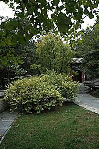 香山公园的绿植