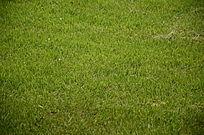 一片绿色的草地