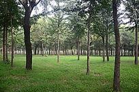 一片美丽的绿色树林