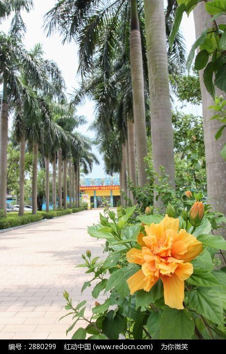 百万葵园大门前的一朵花