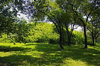 被植被覆盖的努尔哈赤陵墓