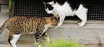 两只猫相会