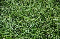 绿色的草地草坪