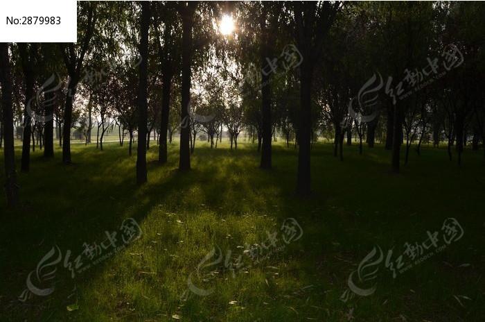 弥河爱情公园里的阳光和草地树木图片