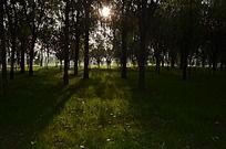 弥河爱情公园里的阳光和草地树木