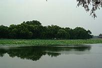 团城湖胡湖心小岛