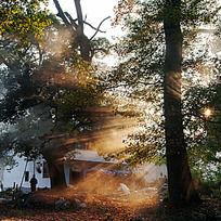 夕阳的光芒透过古红枫树林