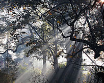 阳光透过树林射来
