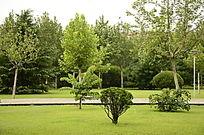 一片绿色的树林和草地