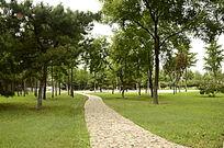 一片绿色的树林和林间小道